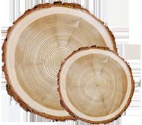 log-spruce-icon